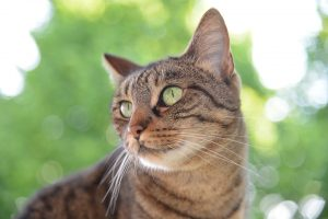 cat-1500498_960_720