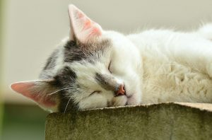 cat-1551794_960_720
