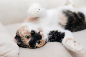 cat-649164_960_720