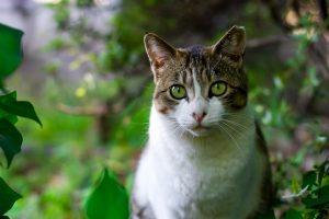 cat-725793_960_720